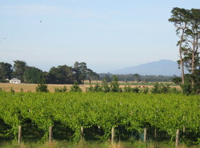Vineyard Tours  - Book here